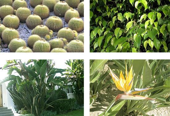 tropical plants in California