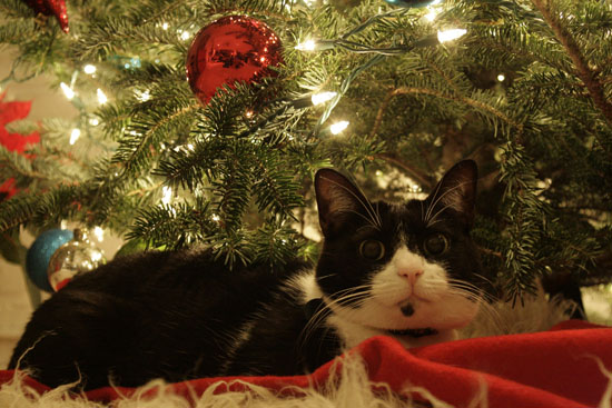 Putting The Tinsel On The Tree, Oops, Make That A Kitty