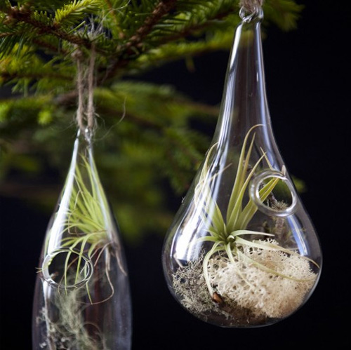 Modern and beautiful glass ornaments with succulents